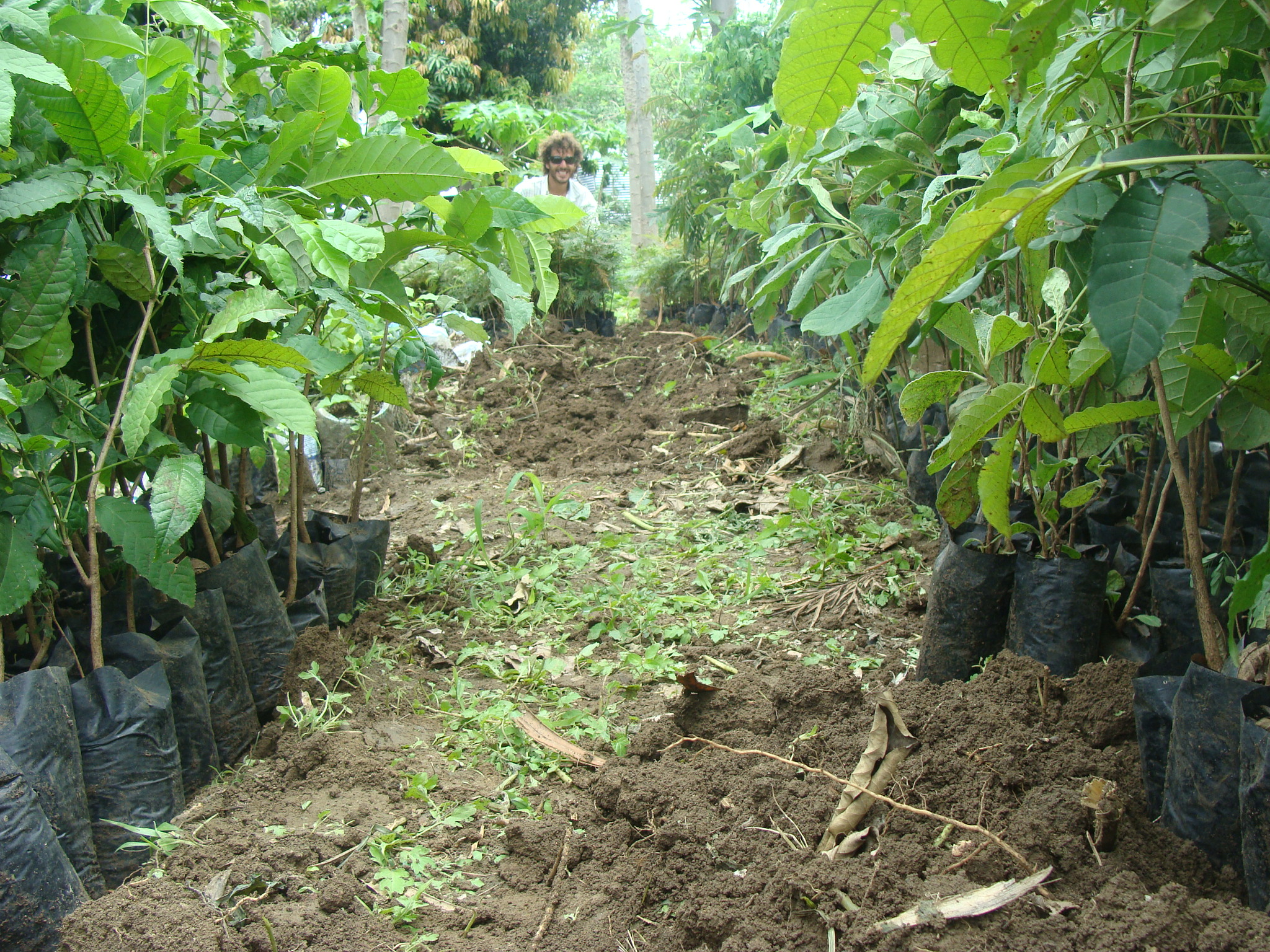 Organic Tree Nursery at EK Demonstration Farm