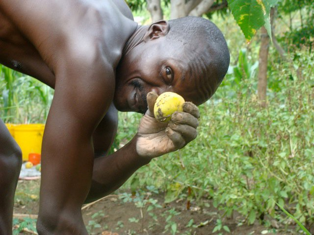Agriculture Coordinator Joel Magioki shows off a home grown mango.